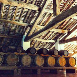 Produzione vinicola a podere francesco